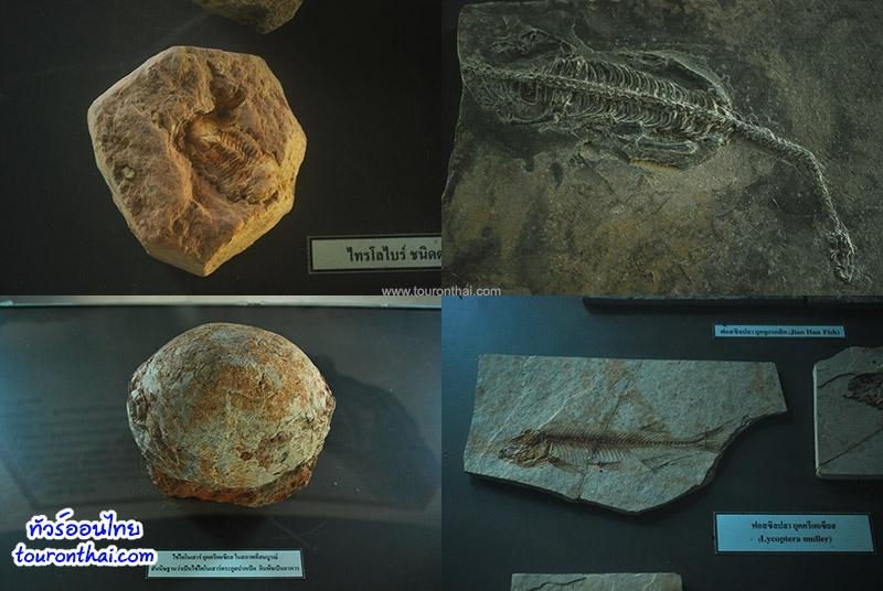 ฟอสซิลไดโนเสาร์ภูฝอยลม