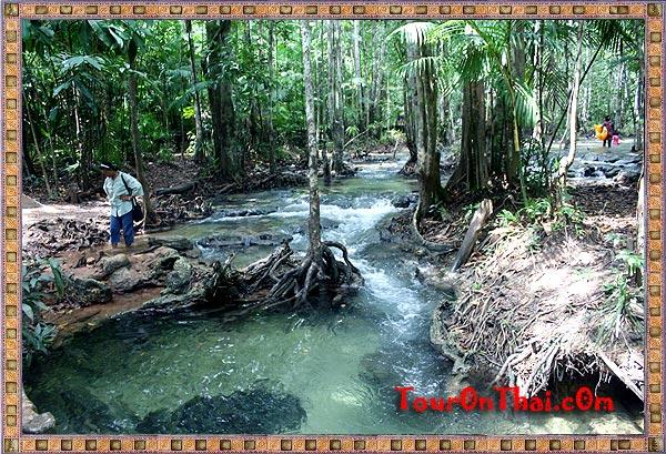 ลำธารในป่าพรุ