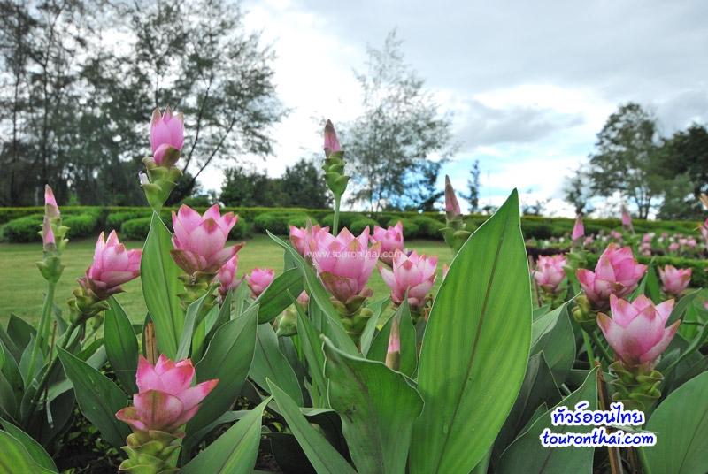 ชมดอกไม้สวยภูฝอยลม